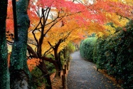 Autumn Colors, Kyoto, Japan      ID 413