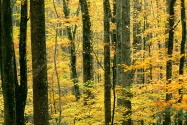 Autumn Forest, Great Smoky Mountains National Pa