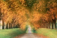 Autumn Road, Cognac Region, France