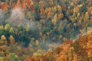 Colorful Autumn Forest, Great Smoky National Par