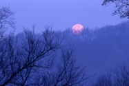 Full Moon Setting, Percy Warner State Park, Tenn