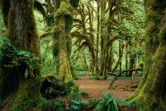 Hall of Mosses, Olympic National Park, Washingto