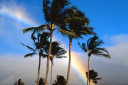 Hawaiian Rainbow      ID 41280