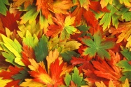 Kaleidoscope of Fall