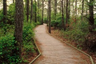 Life of the Forest Trail, Assateague Island, Ber