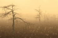 Morning Dew, Everglades National Park, Florida