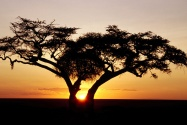 Safari Sunrise, Africa      ID 17989