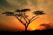 Samburu Hills Sunrise, Samburu Game Reservation,