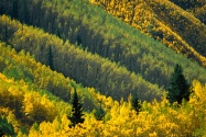 Splash of Gold, Maroon Creek Valley, White River