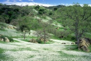 Spring Wildflowers and Oak Covered Hills, Kern C