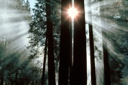 The Rays of Yosemite Valley, Yosemite National P
