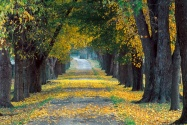 Tree Lined Roadway, Louisville, Kentucky   1600x