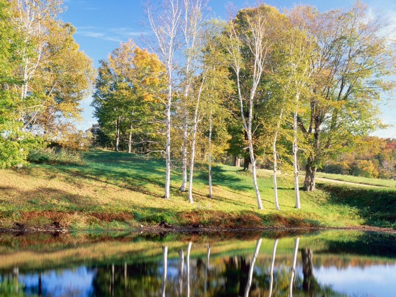 nature wallpapers 2017, wallpapers,nature 2017 birch_trees_vermont_