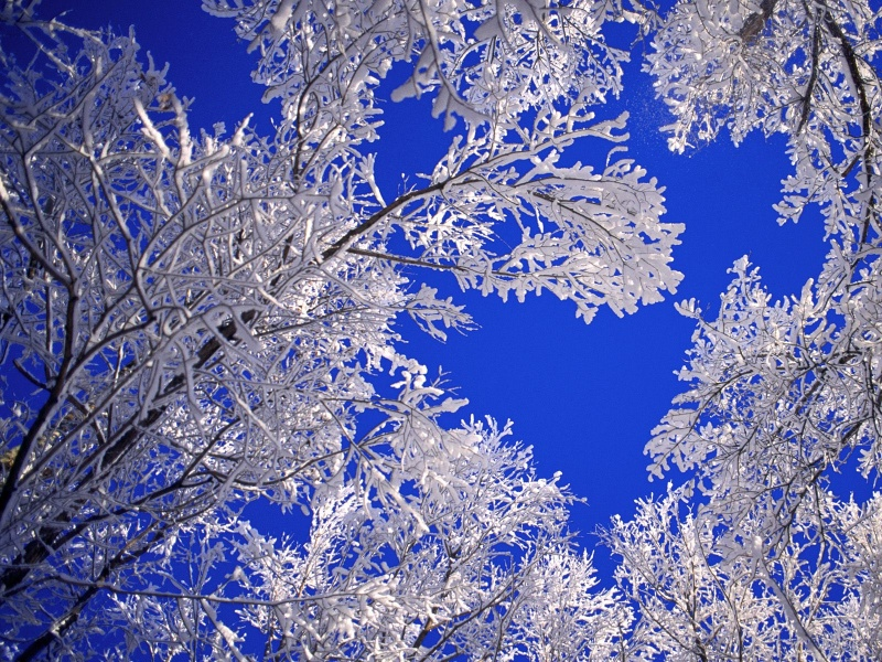 Frosted Trees, Boulder, Colorado      I